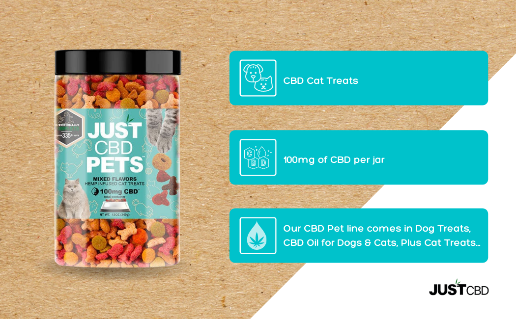 CBD Oil for Cats: The way It could possibly Produce Ones Pet's Lifetime Superior